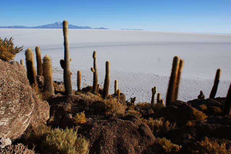 salzwüste-salar-de-uyuni-bolivien-fischinsel