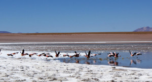 salzwüste-salar-de-uyuni-bolivien-laguna-colorada-flamingos