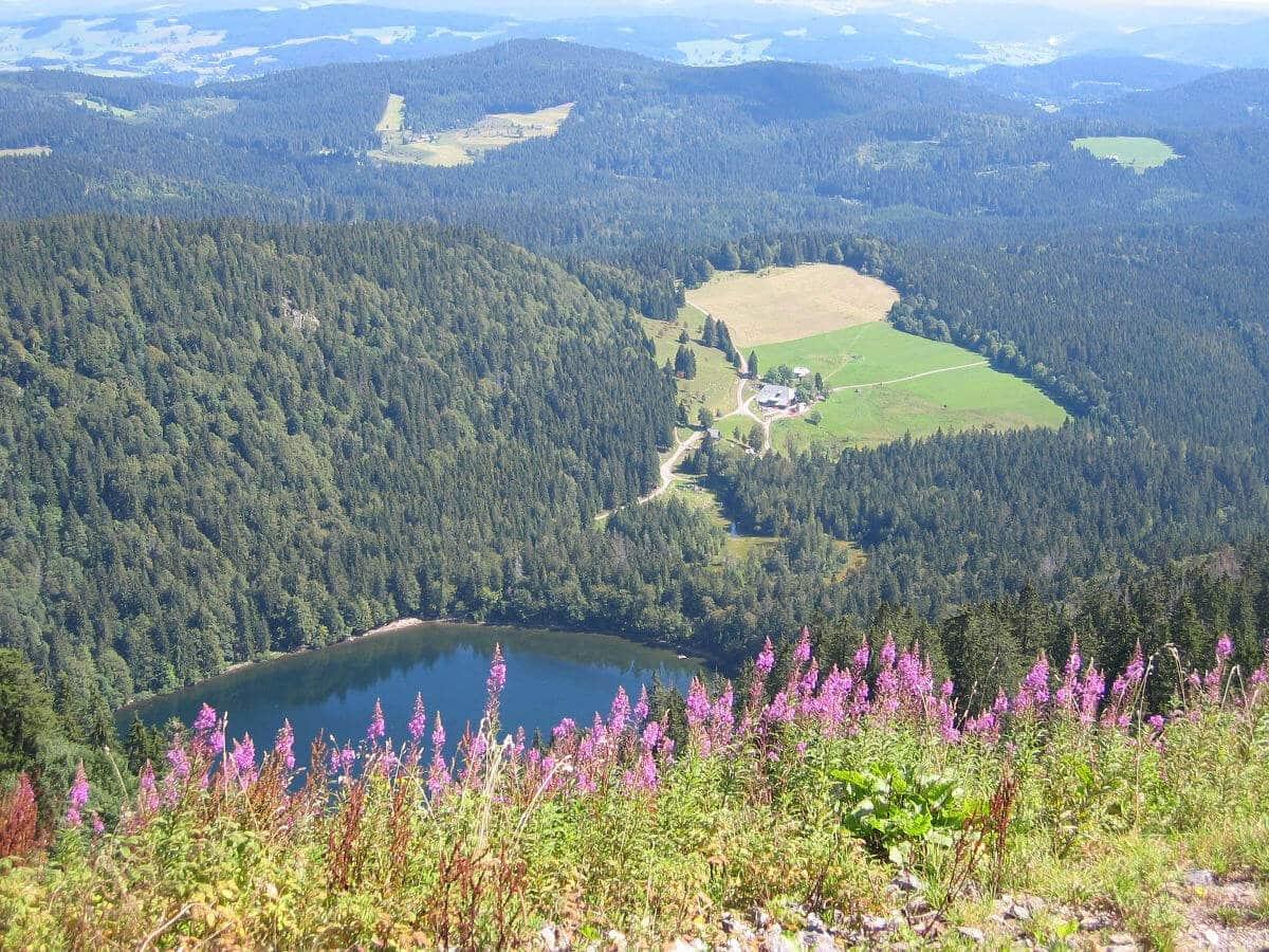 Blick vom Feldberg hinunter zum Feldsee.